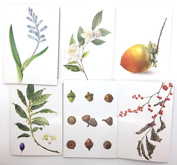 Pack of 6 Botanical Cards by Stephanie Pui-Mun Law