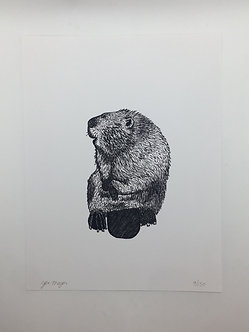 Beaver Print by Jen Meyer