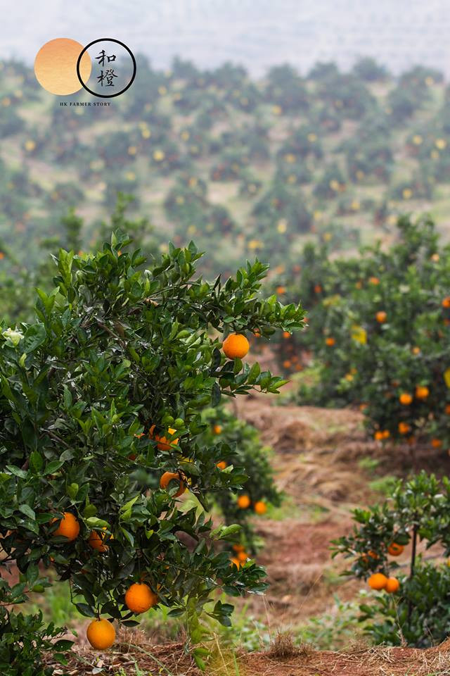 橙園.jpg