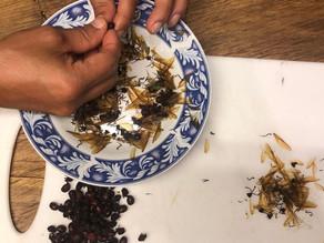 瞬間看地球🌏:哥倫比亞的螞蟻🐜魚子醬