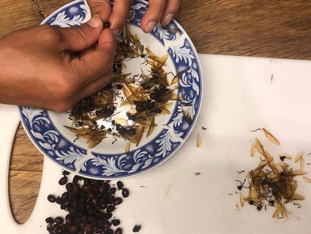 瞬間看地球🌏:哥倫比亞既螞蟻🐜魚子醬
