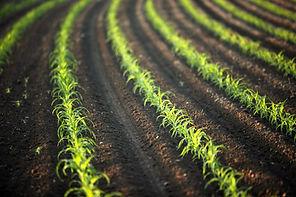 green_field_oregon_canon_ian_eos_early_c
