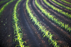 green_field_oregon_canon_ian_eos_early_c