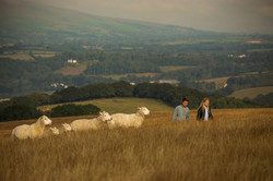 Checking sheep
