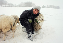 Lewis and a rather snowy sheep