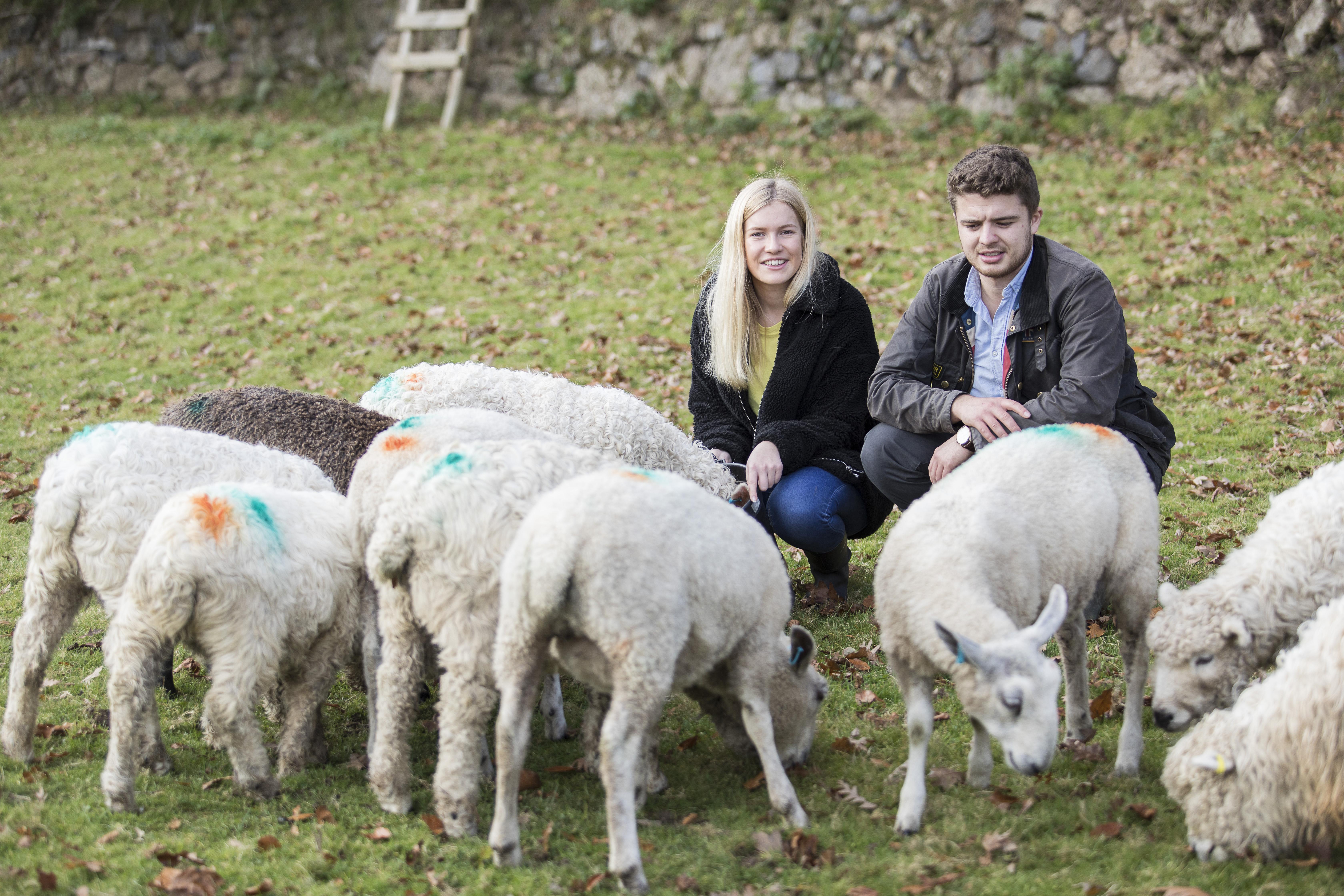 Dartmoor Shepherd_is3a5549