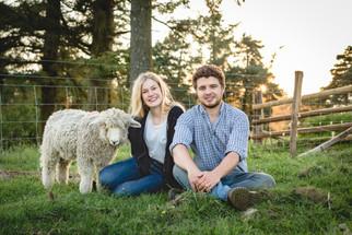 A Shepherd's Blog