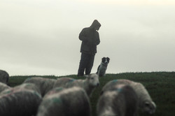 Lewis and Moss checking flocks