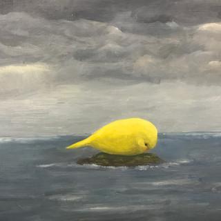 Sea Budgie (2017)