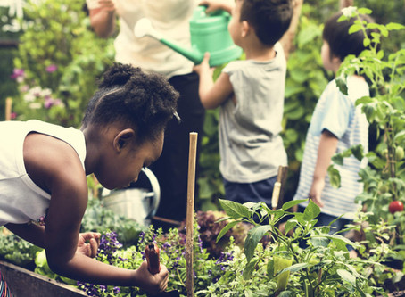 How an urban school's gardening project healed a community