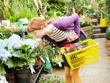 Why garden centres are essential and should remain open