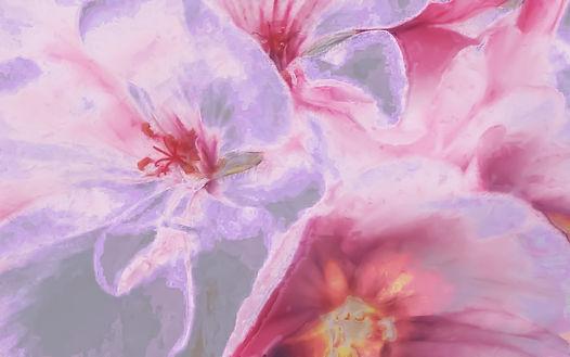flowers-2972339_1280.jpg