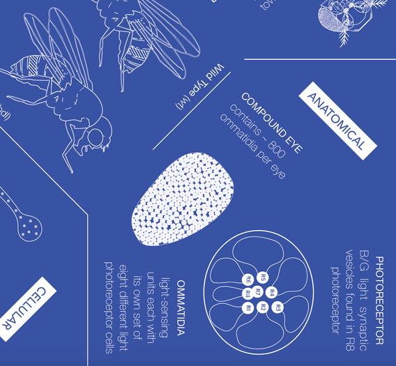 Blueprint Infographic - Close Up