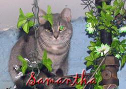 samantha 2