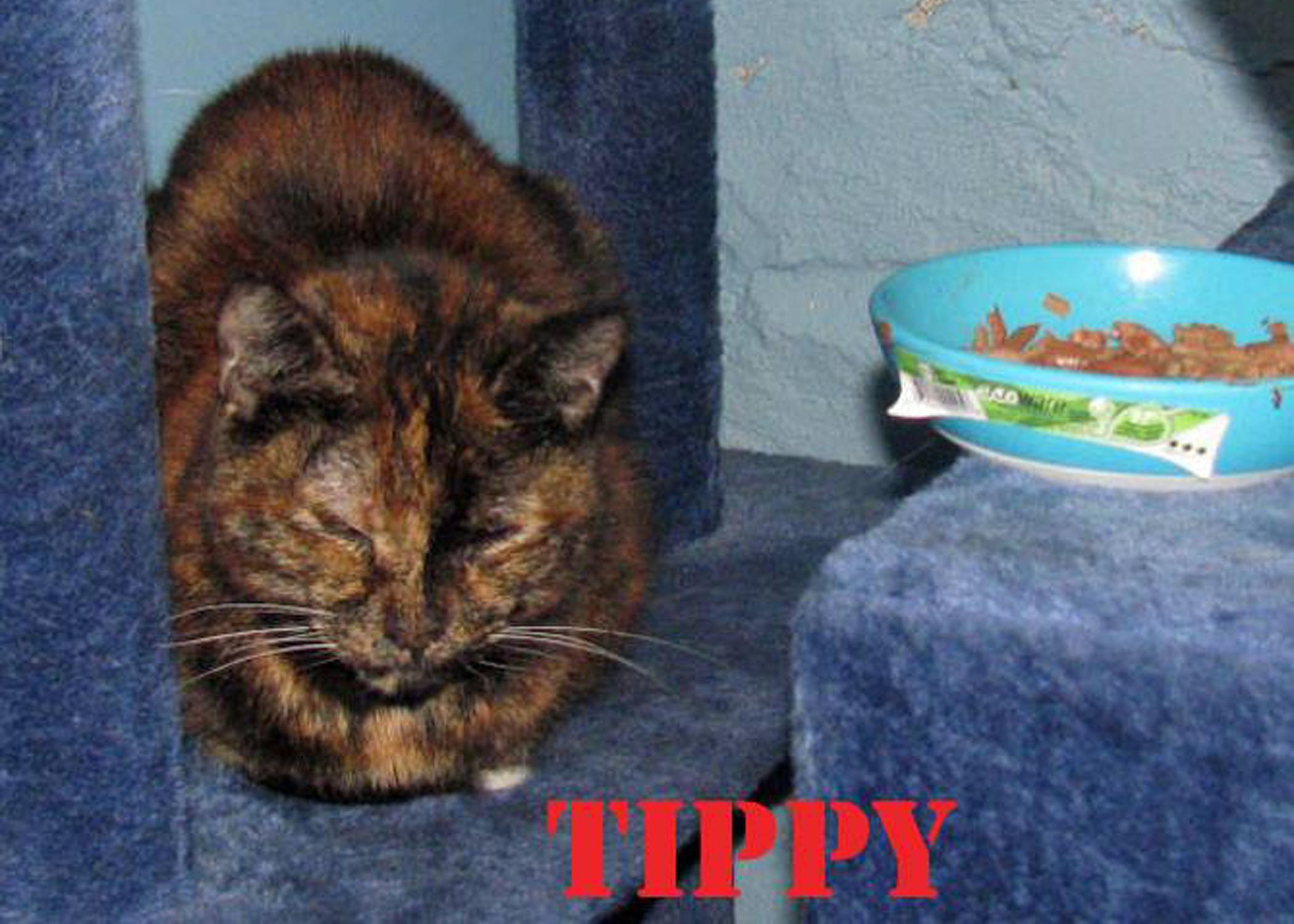 tippy 2