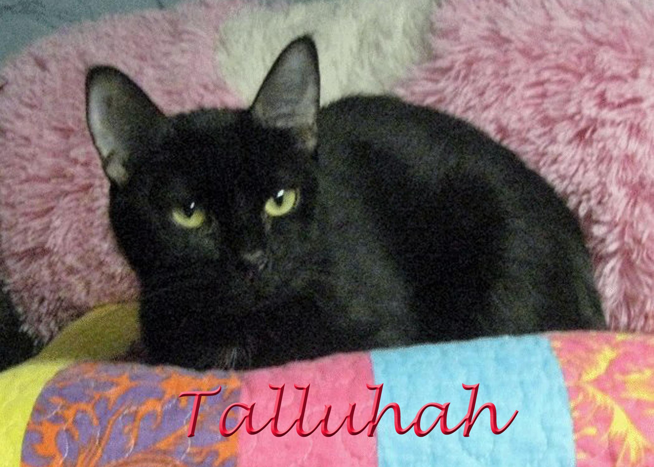 tallulah 2