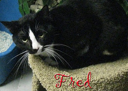 fred 2