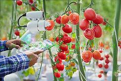 Farmer using digital tablet control robo
