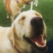 This dog is so happy about dog daycare at Bark's Play and Stay in Grand Junction, CO.!