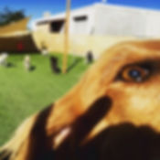 One of our dog daycare play groups at Bark's Play and Stay in Grand Junction!