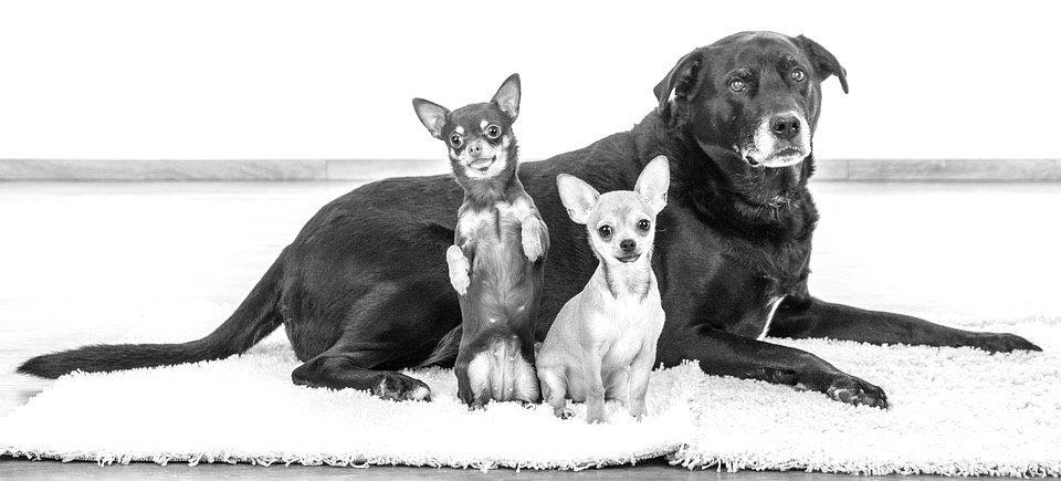 dogs-2693074_960_720_edited_edited.jpg