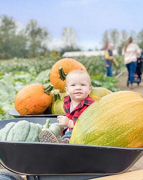Pumpkin patch kid.JPG