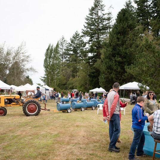 Home Farm Sunflower Festival