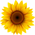 SUNFLOWER [Converted].png