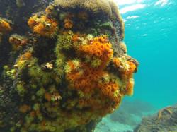 Corais multicoloridos