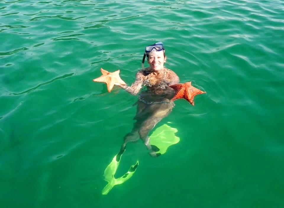 Estrelas do Mar de diversos tamanhos
