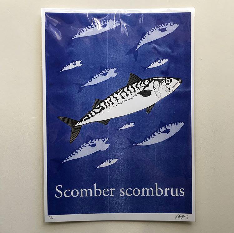 Scomber scombrus