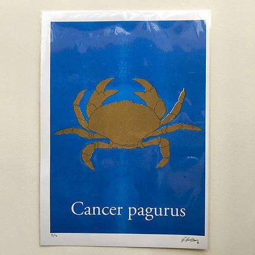 Cancer pagurus-Flat Gold