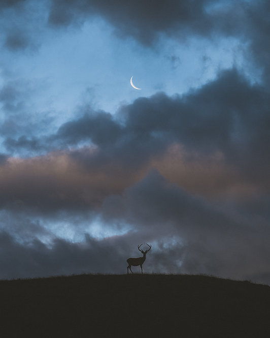 The Lonely Deer