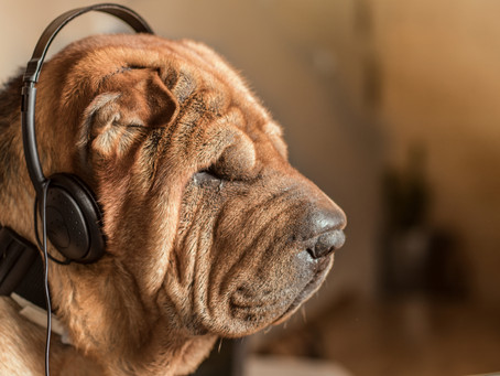 Why Your Pets Should Listen To Music