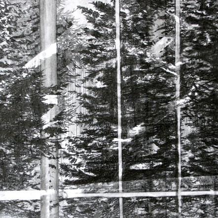 Fenster, 2017