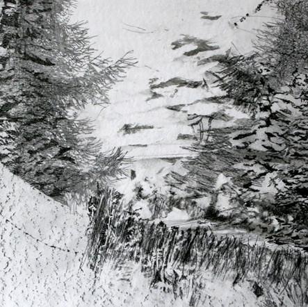 Schneise, 2017