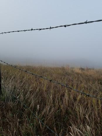 Fog and Fences