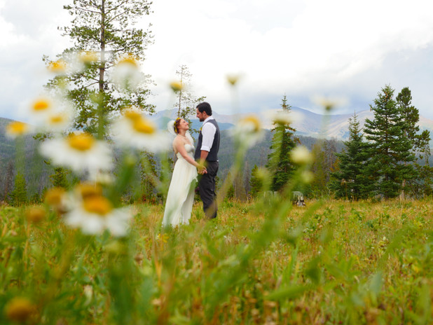 Through A Field of Wild Flowers
