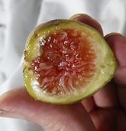 Sliced ripe Hardy Chicgo fig