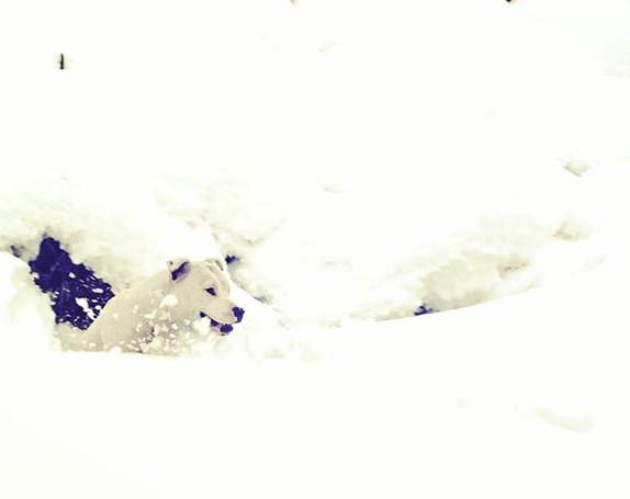Boo enjoying Snow day! #staffordshirebul
