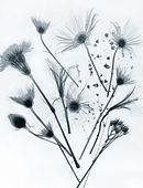 flowers-x-ray-printable-blue-on-white co