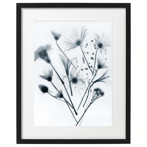 Kwiaty, zdjęcie-x-ray blue. Plakat 30x40 cm