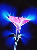 kirlian-flower-1-full-color copy.jpg
