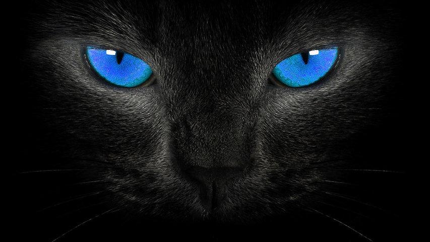 black-cat-blue-eyes-wallpaper-hd.jpg
