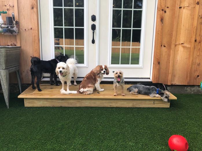 Small dog hangout