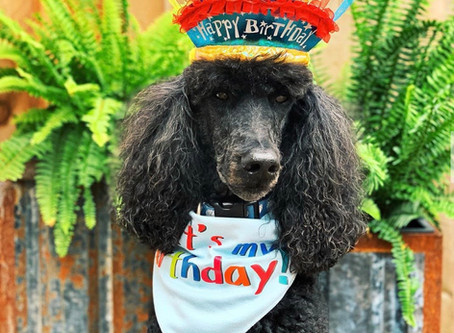 Celebrate Your Pup's Birthday at Stone Dog!