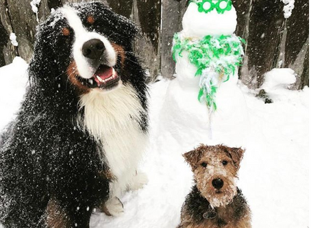 Snow Safety for Dogs!