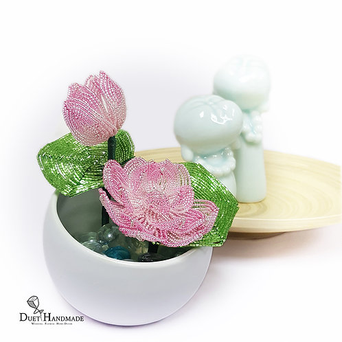 French Beaded Lotus Plant
