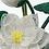 Thumbnail: French Beaded Lotus Plant