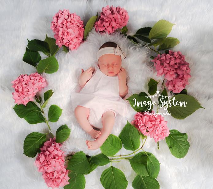 Parmi les fleurs ... 🌺🌺🌺